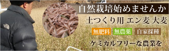 自然栽培 土つくり用 エン麦 大麦